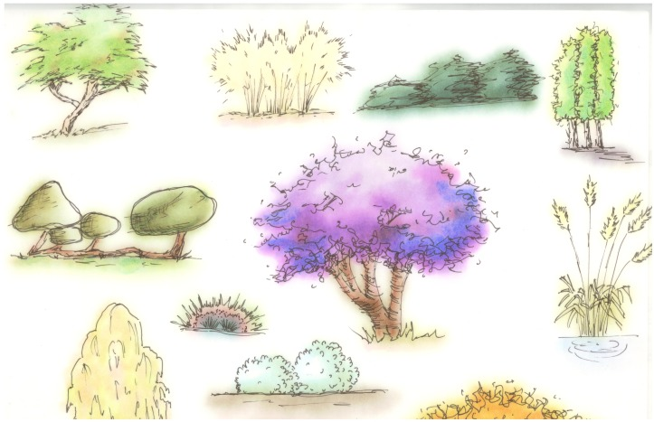 Practice Trees, color