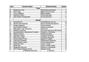 P&T Plant List 2014 - 1