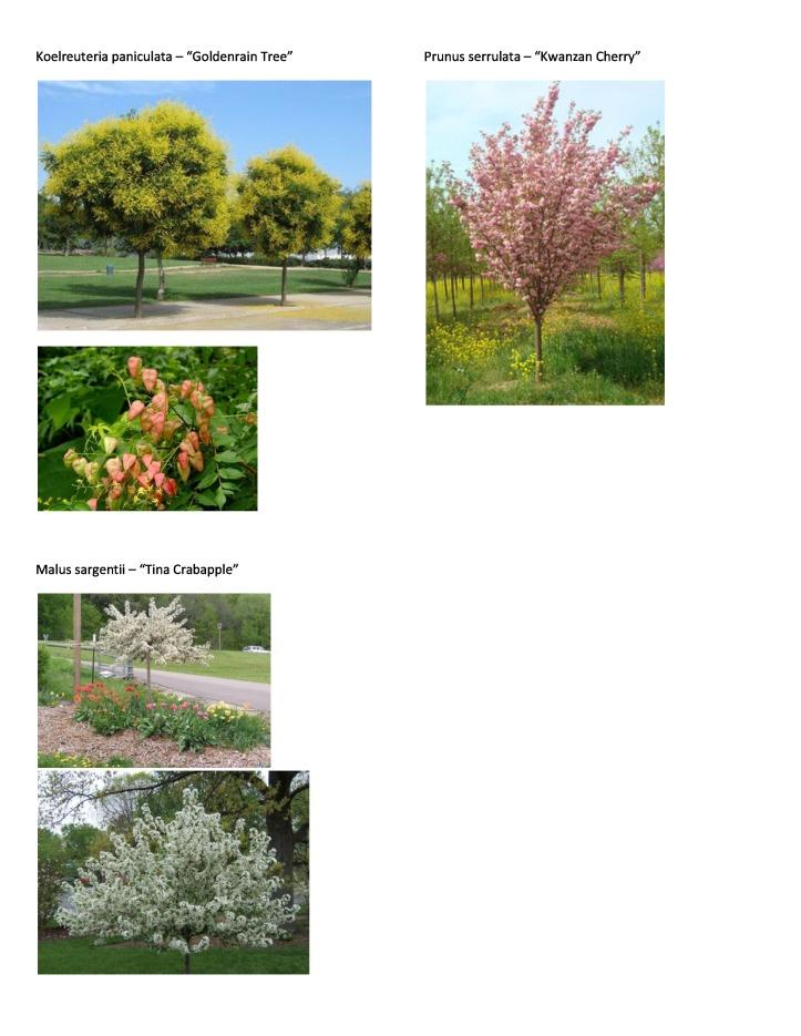 P&T Plant Picture List 1
