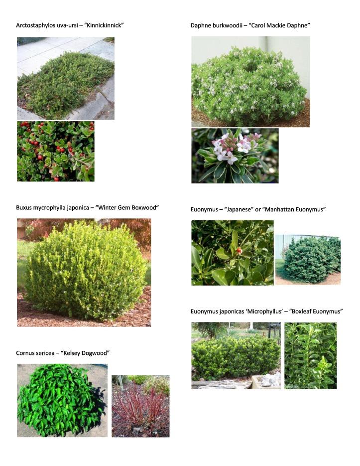 P&T Plant Picture List 2