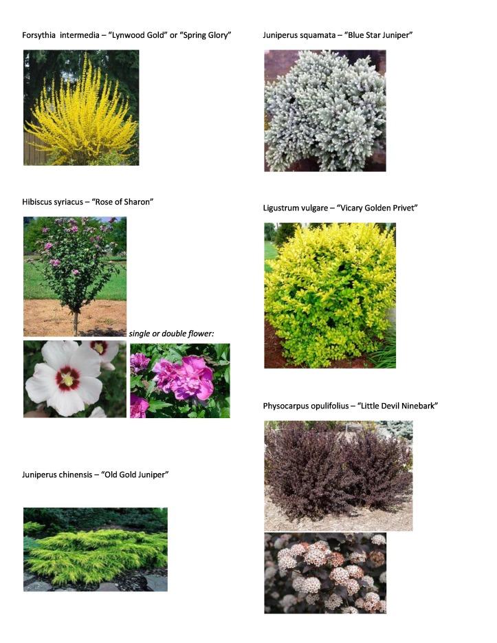 P&T Plant Picture List 3