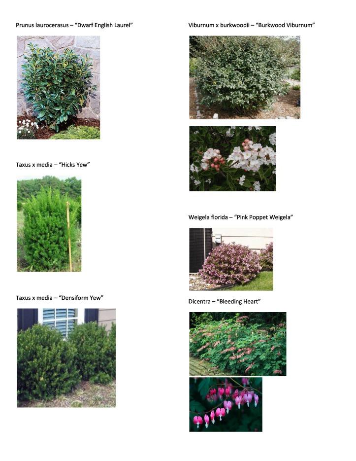 P&T Plant Picture List 4