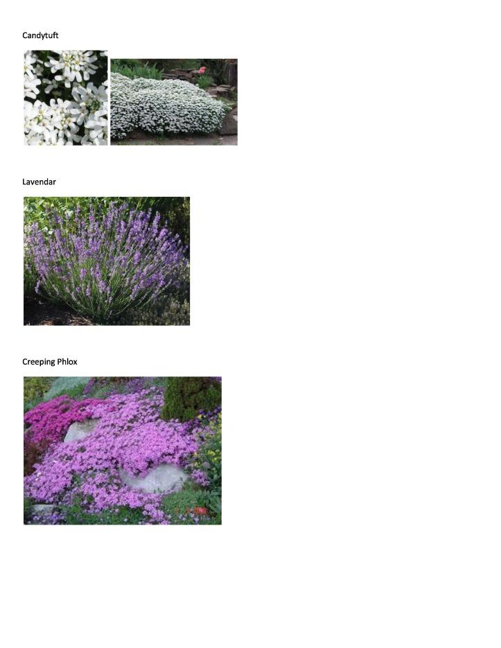 P&T Plant Picture List 6