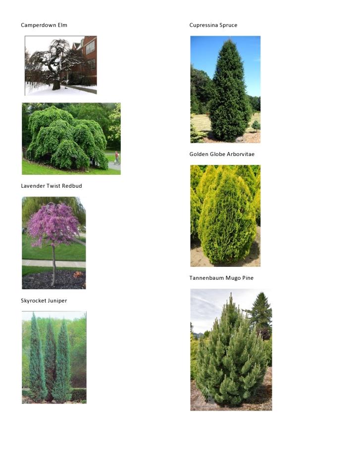 Michaelis Plant Pics 1