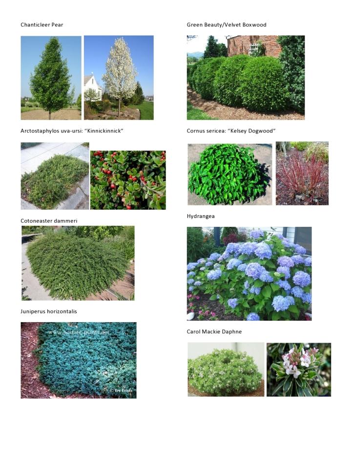Michaelis Plant Pics 2