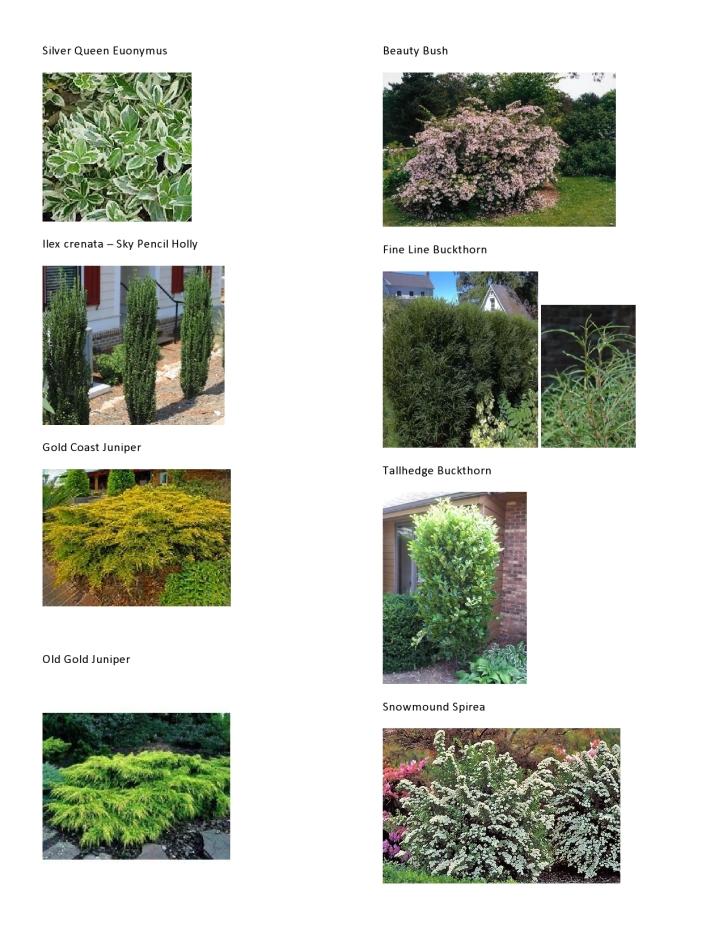 Michaelis Plant Pics 3