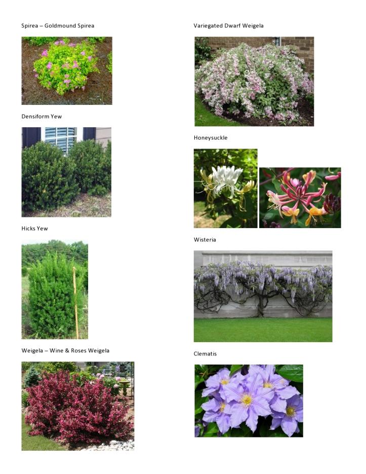 Michaelis Plant Pics 4
