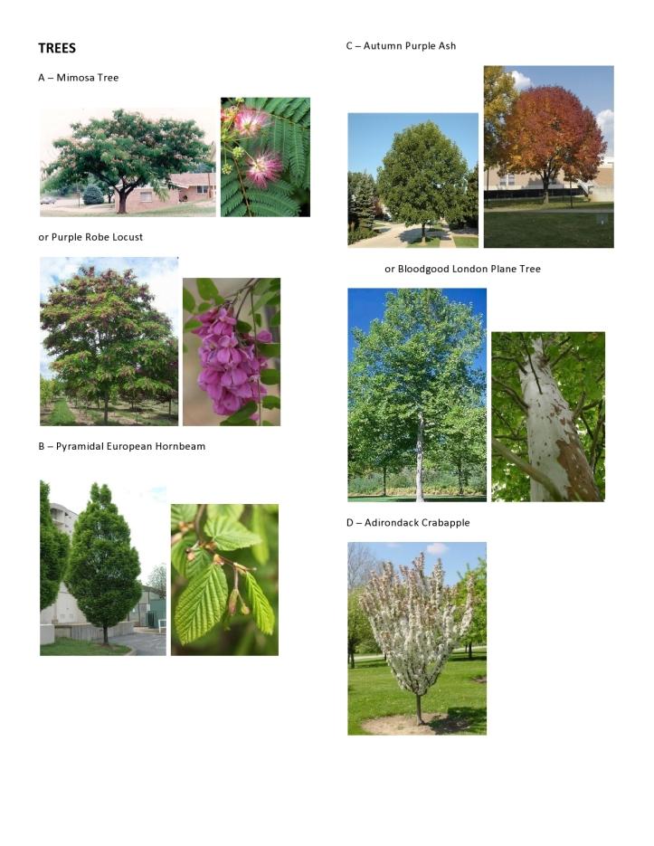 Dawson - Master Plant Pics 1