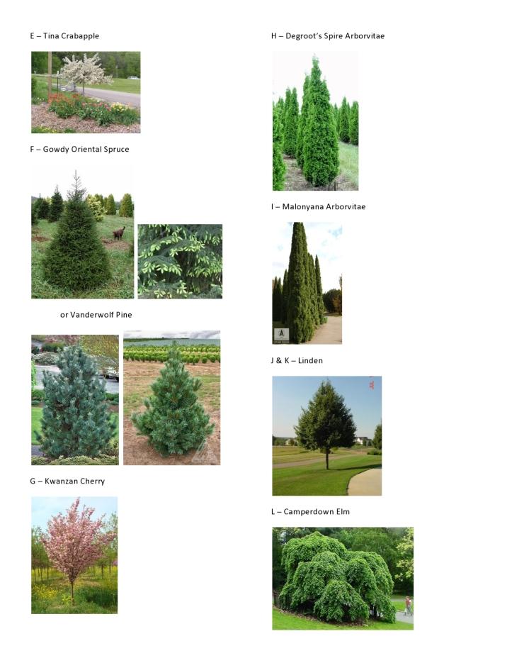 Dawson - Master Plant Pics 2