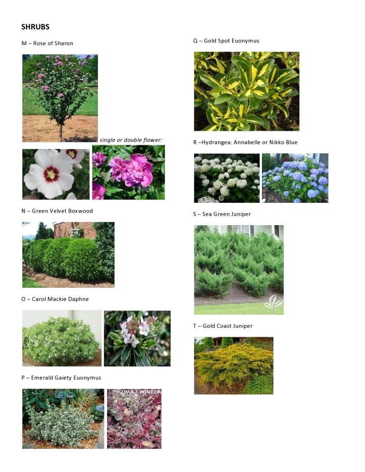 Dawson - Master Plant Pics 3
