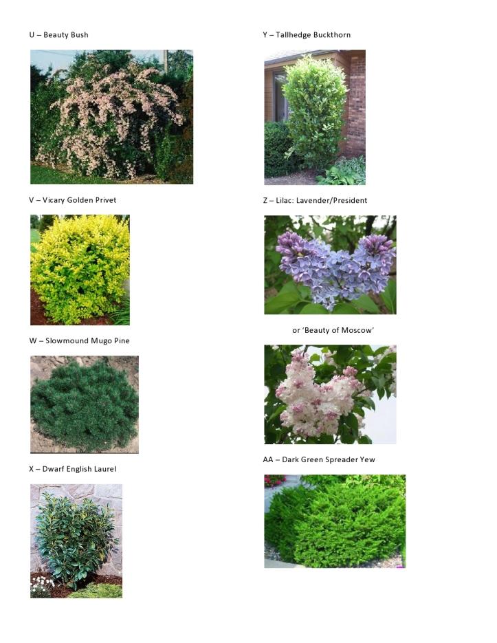Dawson - Master Plant Pics 4