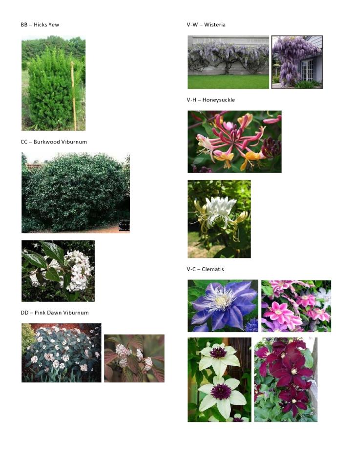 Dawson - Master Plant Pics 5