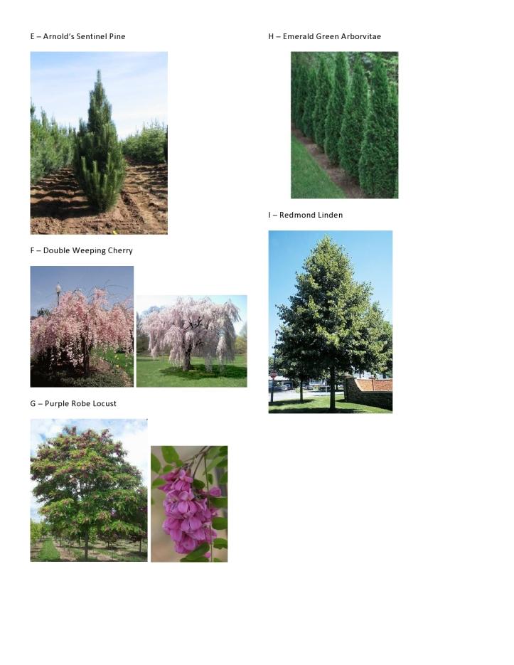 C&V Hinman - Plant Pics 2