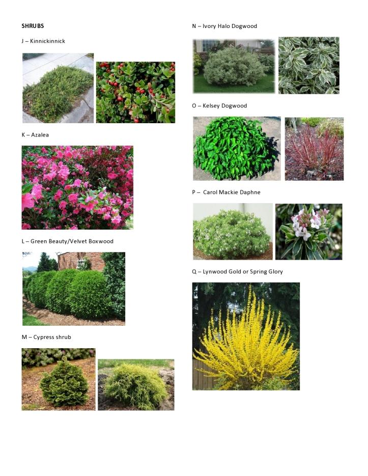 C&V Hinman - Plant Pics 3
