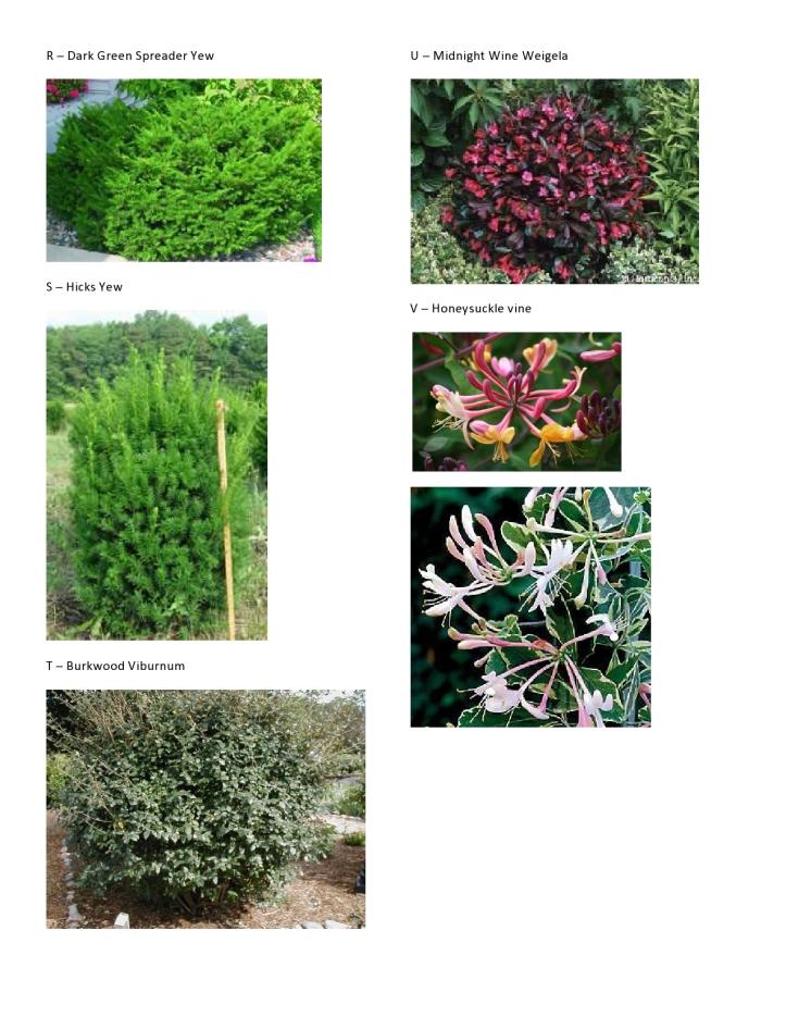 C&V Hinman - Plant Pics 4